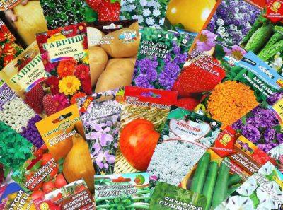 Россельхознадзор выявил карантинный сорняк в пакетированных семенах в Кузбассе