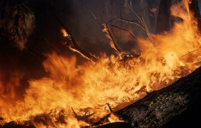 Синоптики предупредили кузбассовцев о высокой пожароопасности