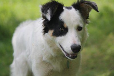 Полиция начала проверку после обращений новокузнечан об отравлениях собак