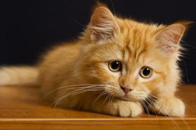 Госдума ужесточила наказание за жестокое обращение с животными.