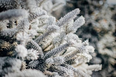В новогодние праздники в Кузбассе синоптики прогнозируют похолодание до -43°С