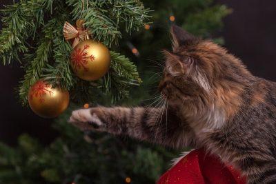 В Кемерове на новогодние оформление потратят более 5 млн