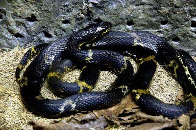 Опасная игра: в сибирском ТРЦ ребёнка после квеста ужалила змея