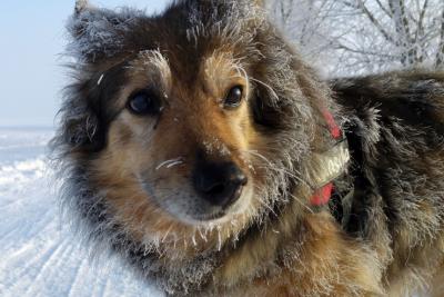 Жители в шоке: кемеровскую Лесную Поляну загадили собаки