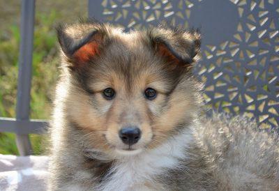 Кузбасские осуждённые начнут производить корм для собак