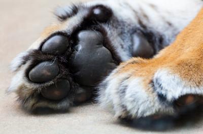 Зрелище не для слабонервных: кемеровчане нашли склад собачьих трупов