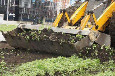В центре Новокузнецка уничтожили газон с запрещённым растением