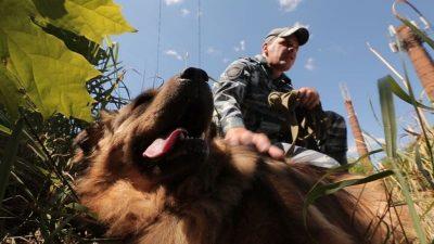 Сколько преступлений раскрыли кузбасские собаки