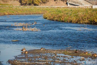Потратят 10 миллионов: что сделают с берегом Искитимки в центре Кемерова