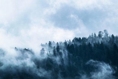 Видео: шаманы с бубнами призывали дождь и делали жертвоприношения для спасения сибирских лесов