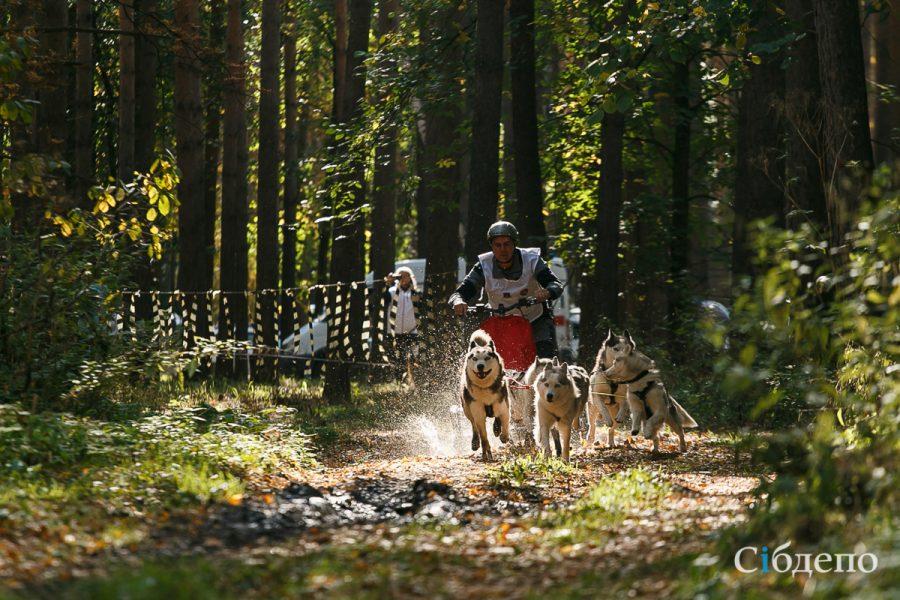 Добрые и сильные: в Кузбассе прошли гонки на собаках