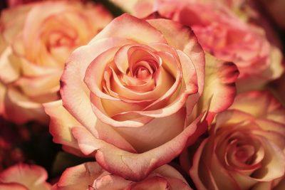 Кузбассовец похитил дорогущий букет цветов, чтобы впечатлить девушку