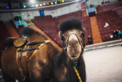 В Кузбассе цирковых животных перевозили с нарушениями