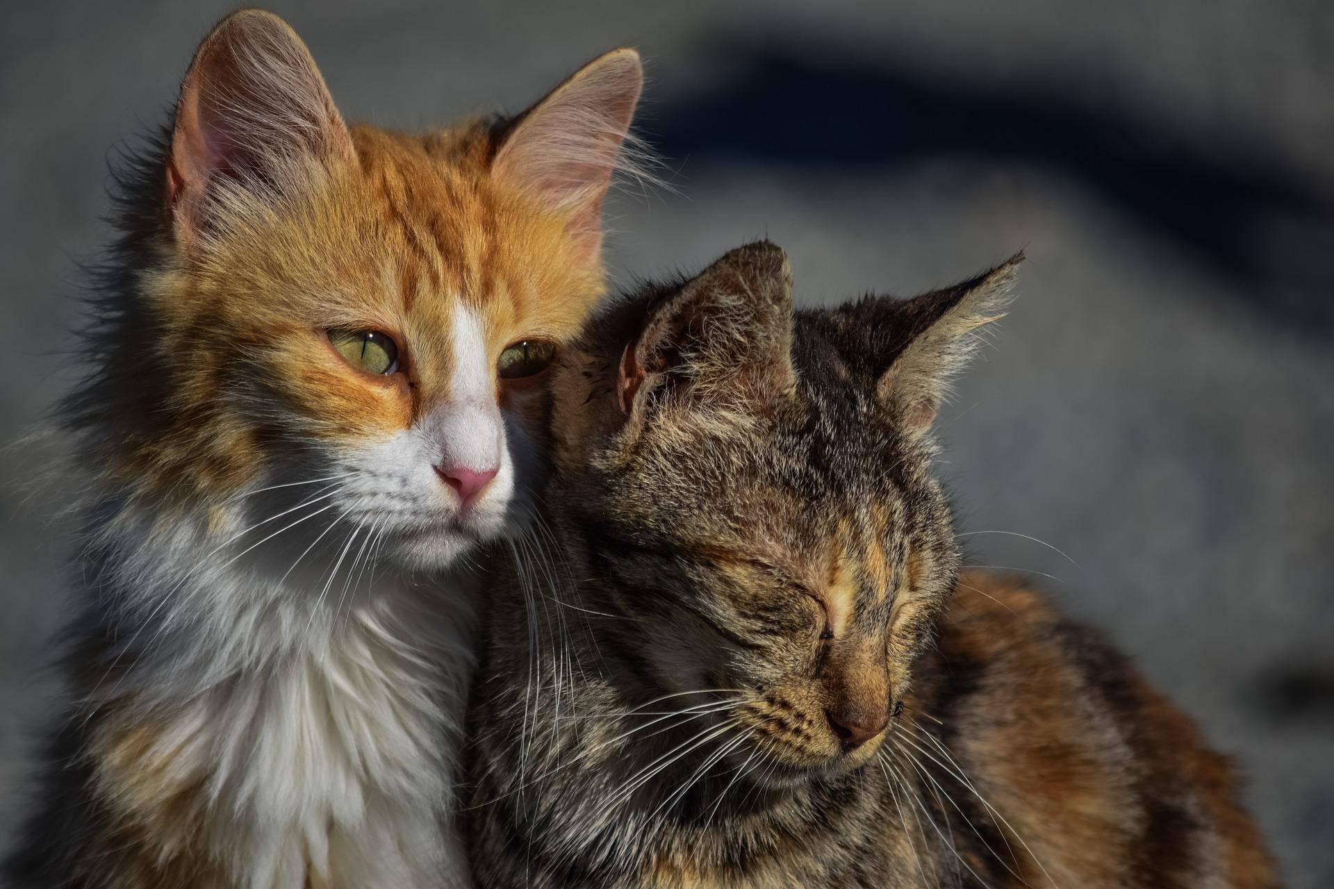 фото с бездомными кошками красивый неприхотливый экзот
