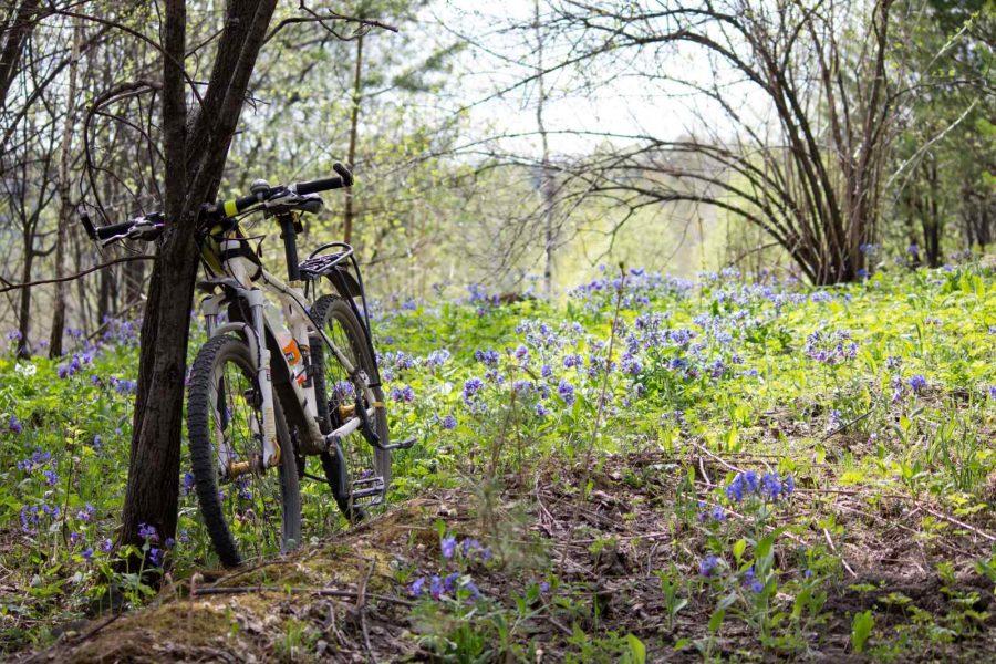 Как выбрать велосипед: советы и рекомендации
